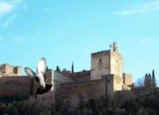 Una paloma vuela frente a la Alhambra. Foto: Camila Montoya