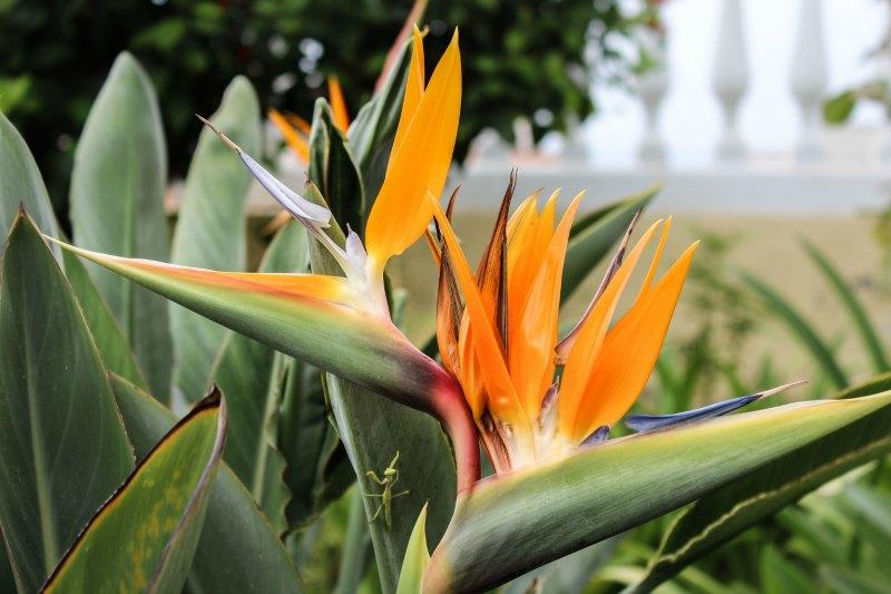 Flores en primavera. Foto: Álvaro Barbero
