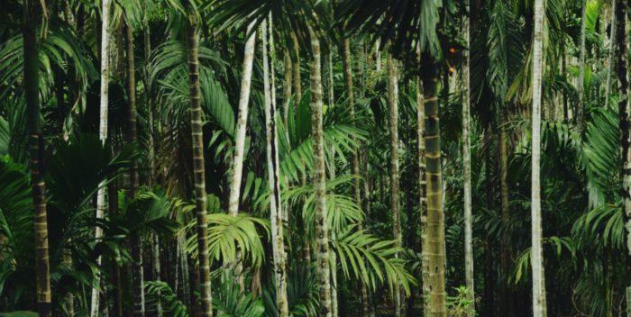 Leyendas y mitos de Iquitos